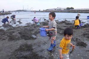 潮干狩り 横浜野島
