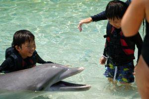 子連れ ハワイ島旅行 3日目 ドルフィン・クエストとコンドミニアム見学